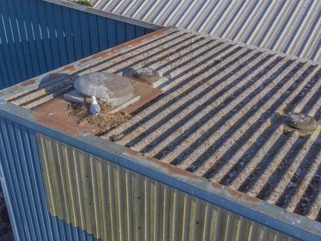 Pest control roof inspection Devon 360